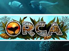 Играть на реальные деньги в Orca